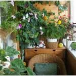 Домашние оранжереи