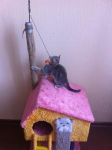 Как сделать домик для кошки - Труба для развлечений
