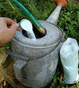 Растворяем минеральные удобрения согласно инструкции