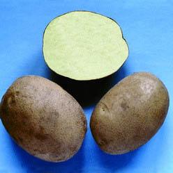 Как определить достаточно ли озеленен картофель?