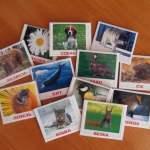 Карточки Домана своими руками